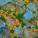 629903_autumn