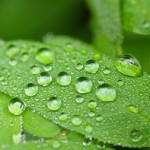water-drop-pearls-on-green-leaves-thumb