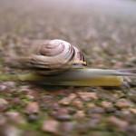 SnailSpeed