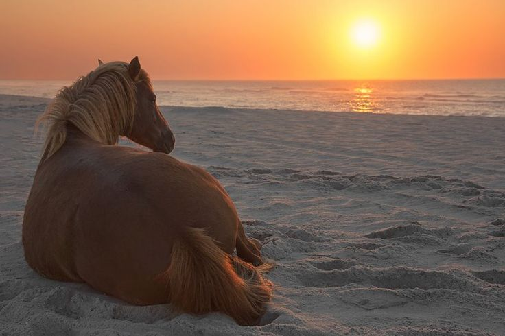 A mare greets the morning sun at Assateague Island State Park, MD